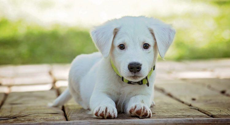 age-dresser-chien