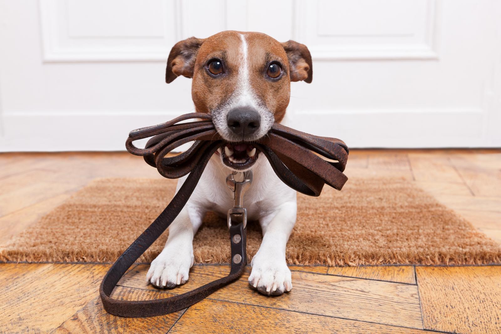 Que peut on apprendre à son chien : quels sont les bases à respecter pour l'apprentissage du chien ?
