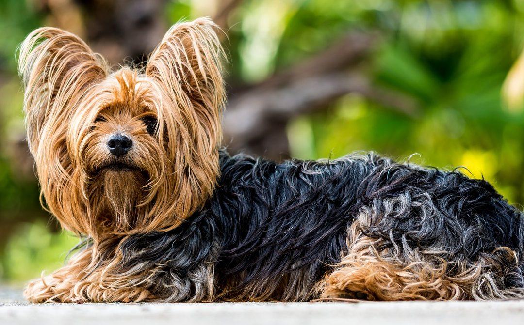 problemes de comportement chien