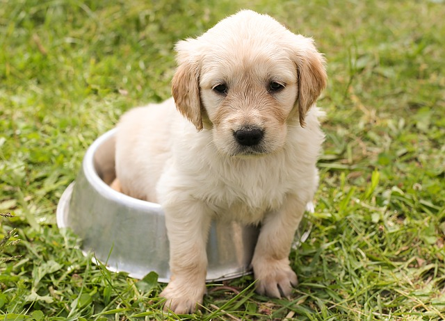 Les pièges à éviter pour assurer son chien