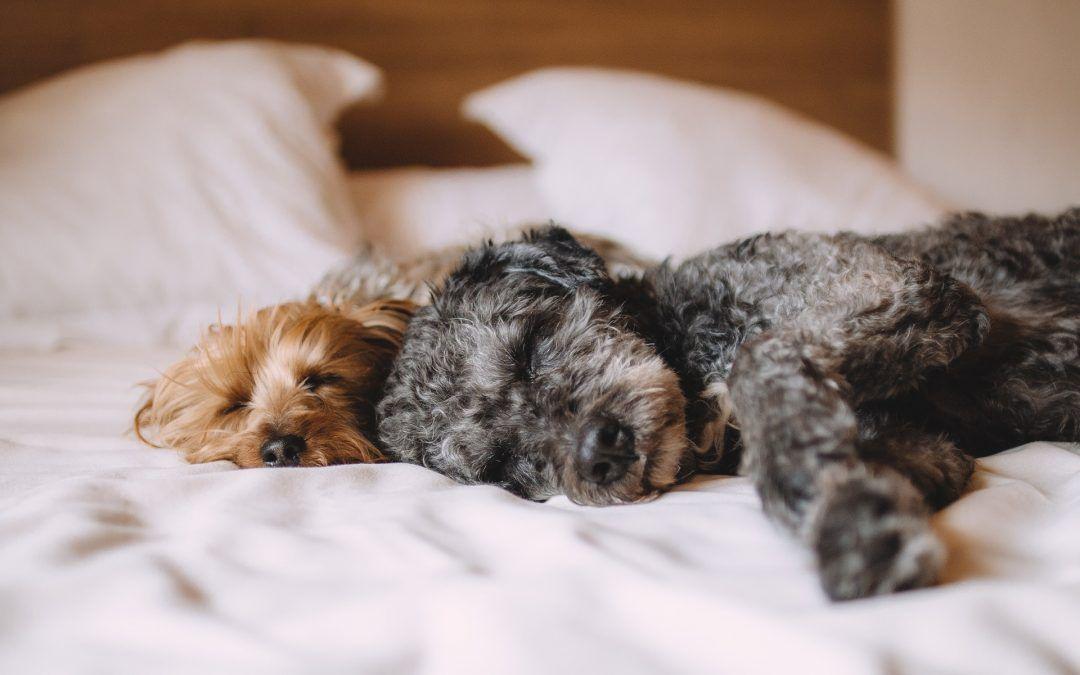 Dormir avec son chien : pour ou contre