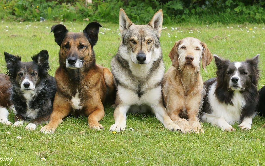 Une éducation selon la race de votre chien