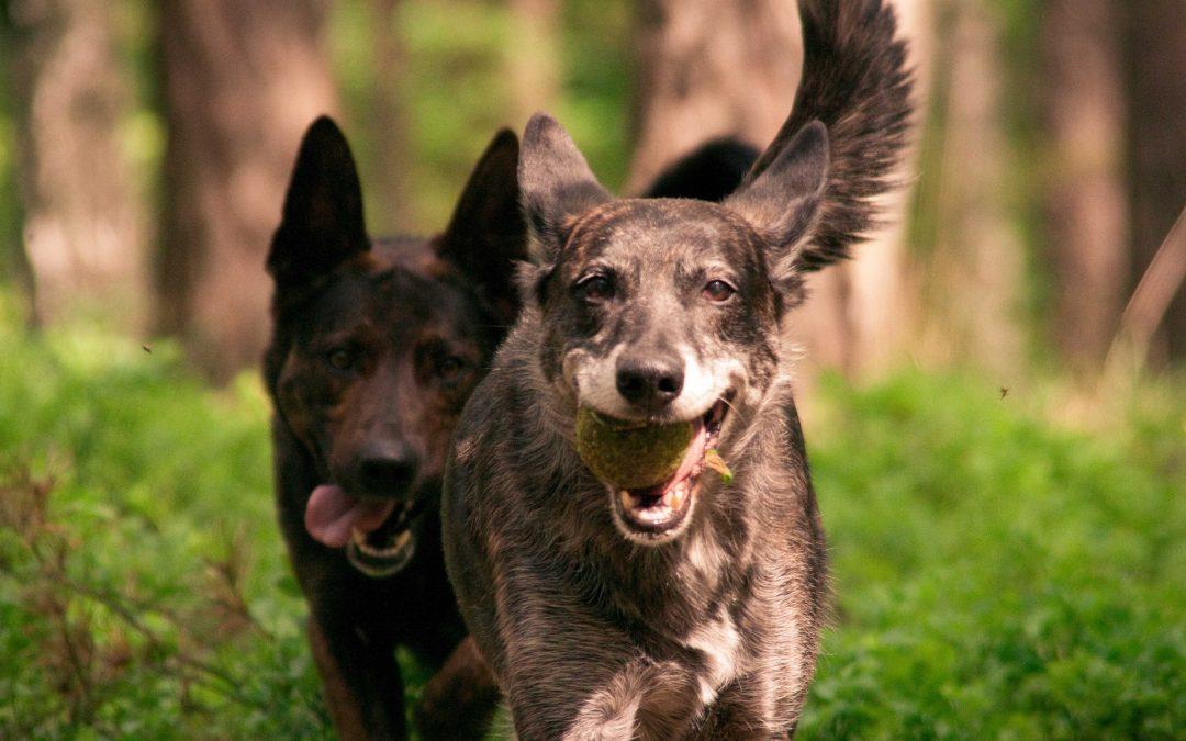 Comment défouler un chien énergique : nos conseils