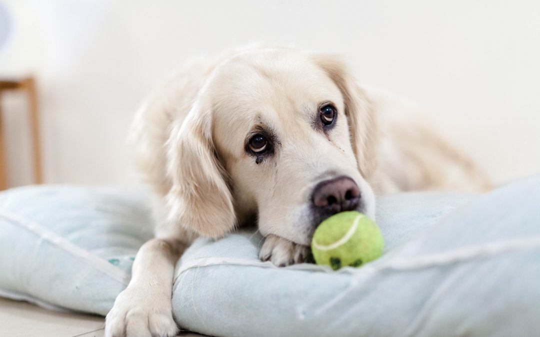 Punir votre chien: nos conseils