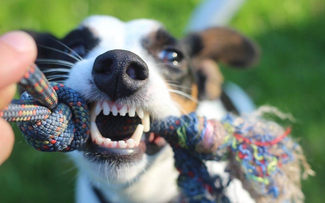 Apprendre à votre chien à renoncer: nos conseils